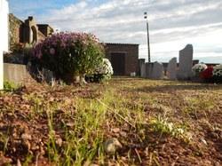 Enherbage des allées de cimetières (2)