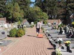 Enherbage des allées de cimetières (3)